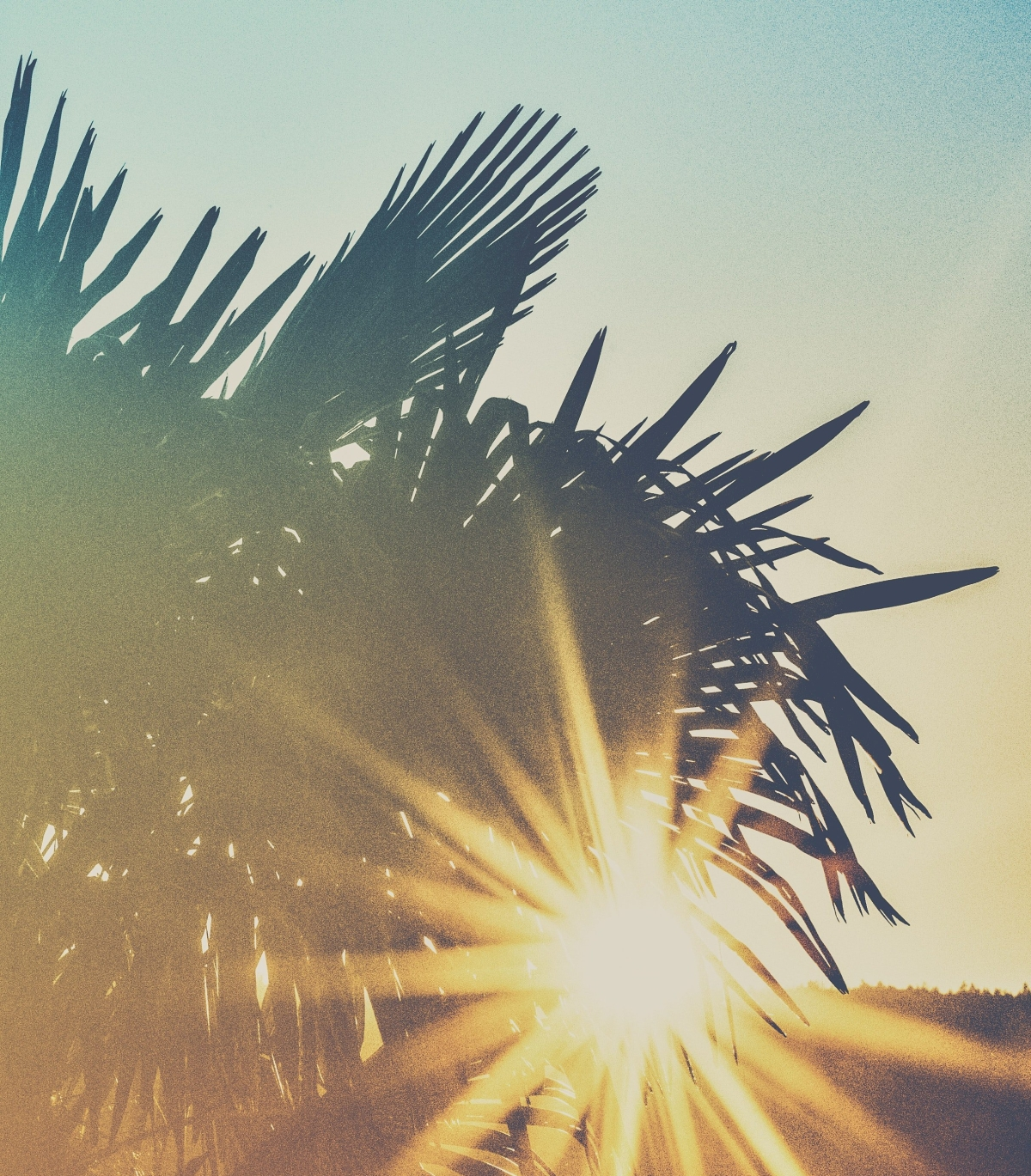 The Road to the Cross: Palm Sunday